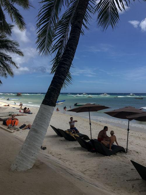 Palm tree on Alona Beach in Bohol Philippines