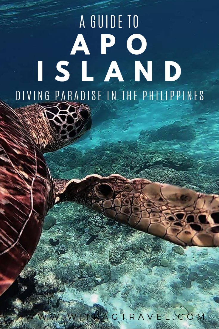 Planning a visit to Apo Island? Use our guide to help plan you visit to dive with the turtles.