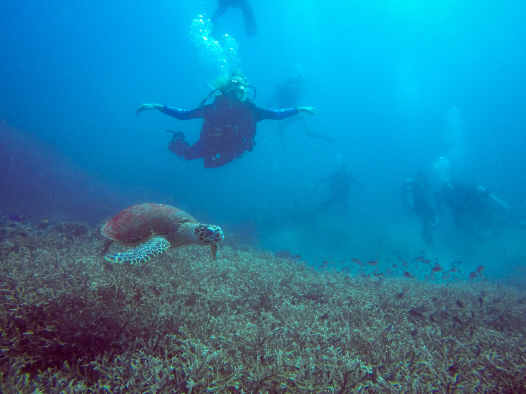 A girl scuba dives with a turtle underwater on Apo Island, Philippines