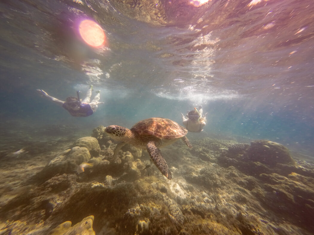 Two girls swim in the water with a turtle, Apo Island, Philippines