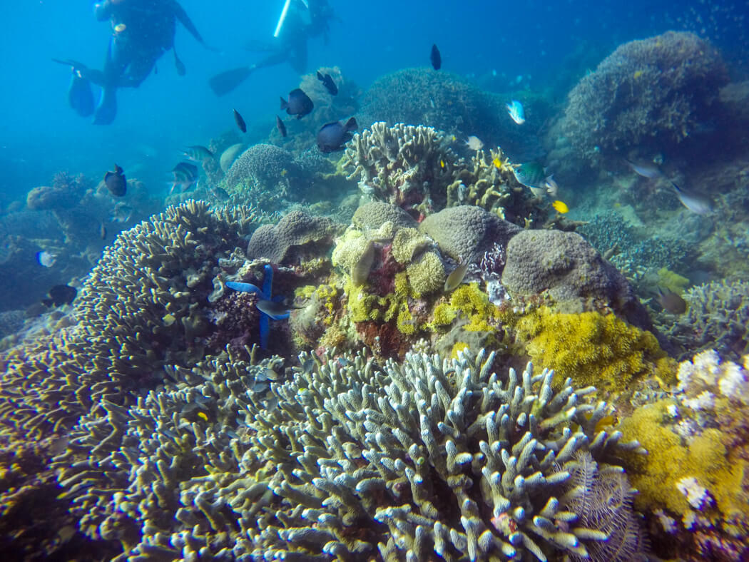 Colourful coral and fish underwater at Apo Island, Philippines