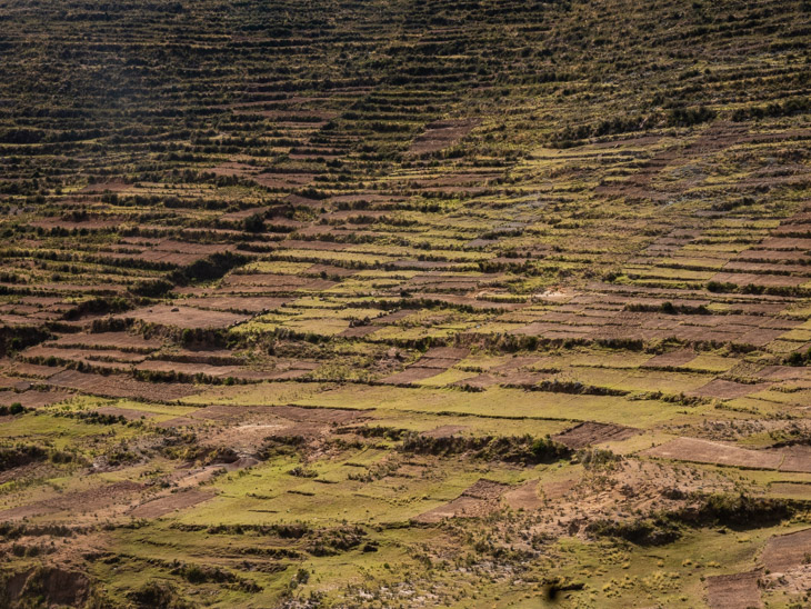 Rows of crops in farmers fields on Isla del Sol, Bolivia