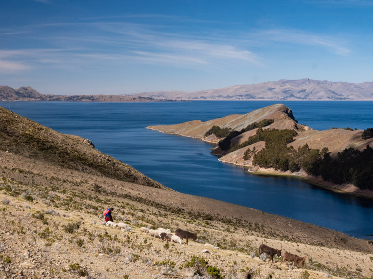 A shepherd moves sheep and donkeys on Isla del Sol, Bolivia
