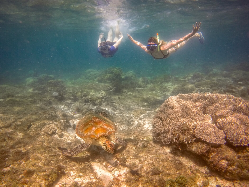 Two girls spot a turtle and snorkel with it, Apo Island, Philippines