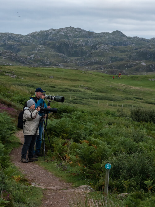 Birdwatchers use their enormous lenses to capture pictures of seabirds
