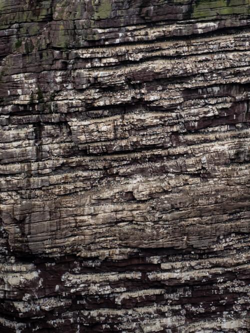 Thousands of birds nest on sea cliffs on Handa Island
