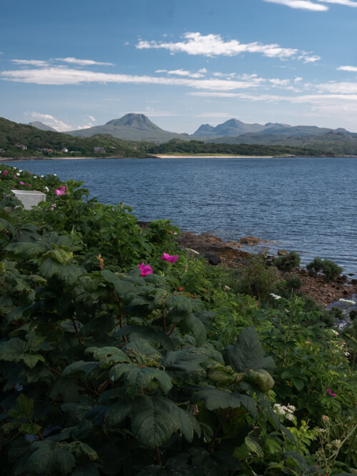 Some flowers with a beach and Torridon hills in the distance