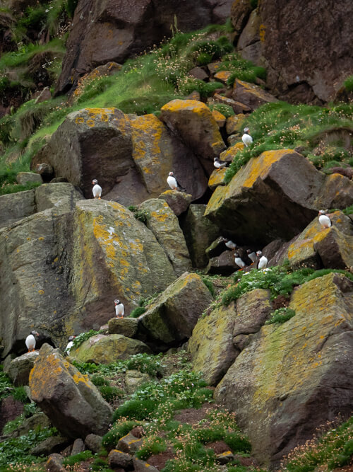 Puffins sit on the rocks at Kearvaig cliffs