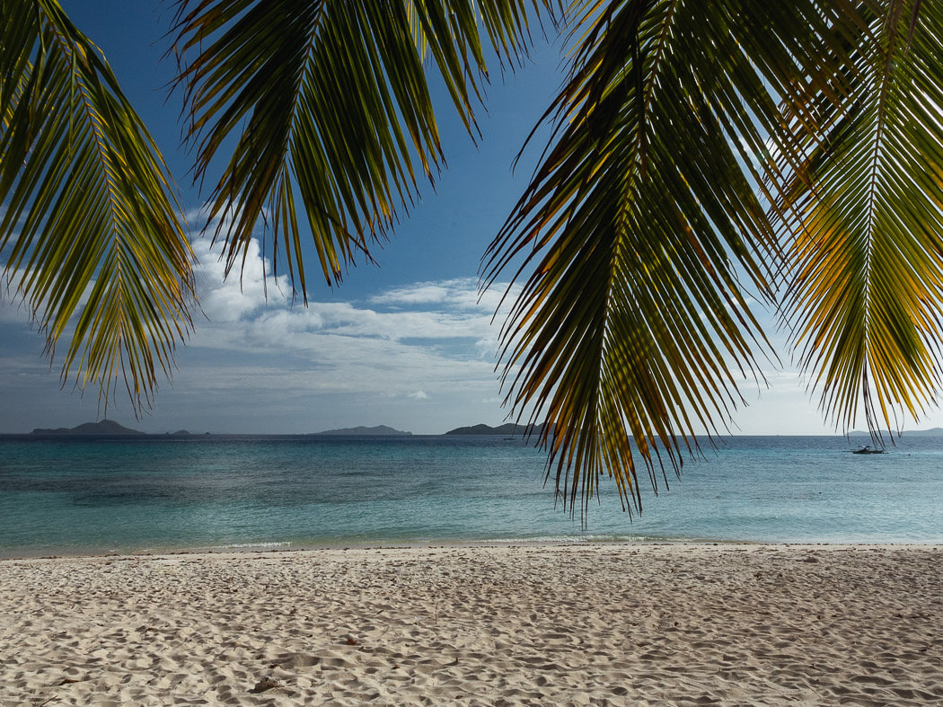 palm trees hang over blue water and white sand