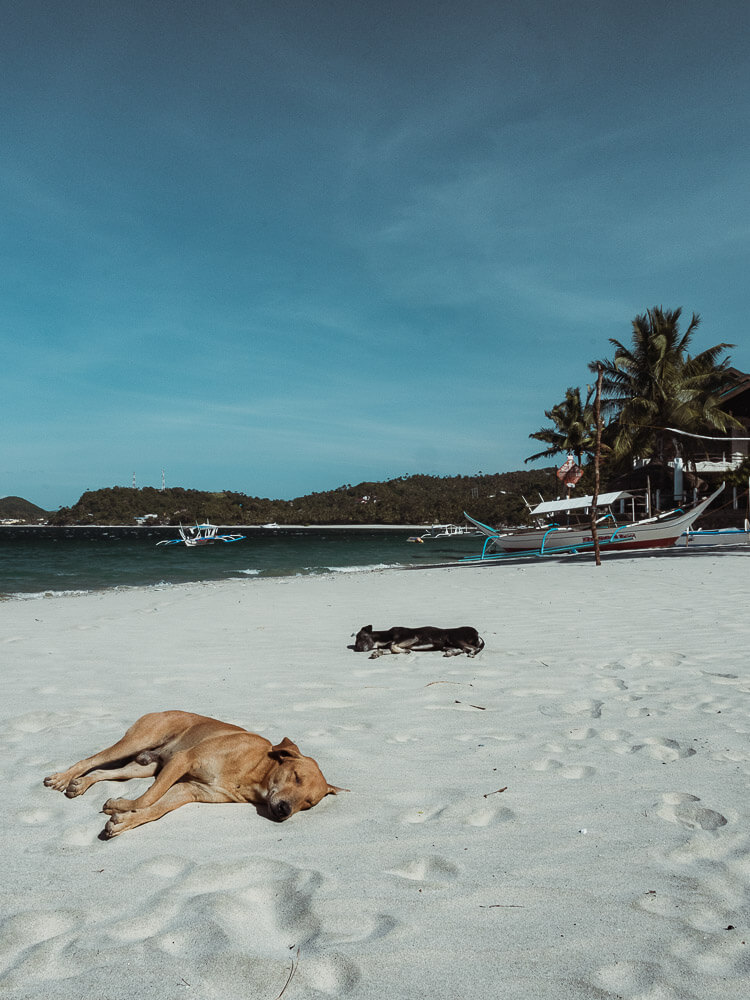 Two dogs sleep on the beach in the Philippines