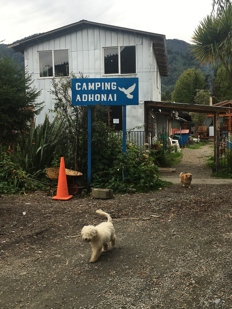 Dogs walking outside the entrance of Camping Adhonai