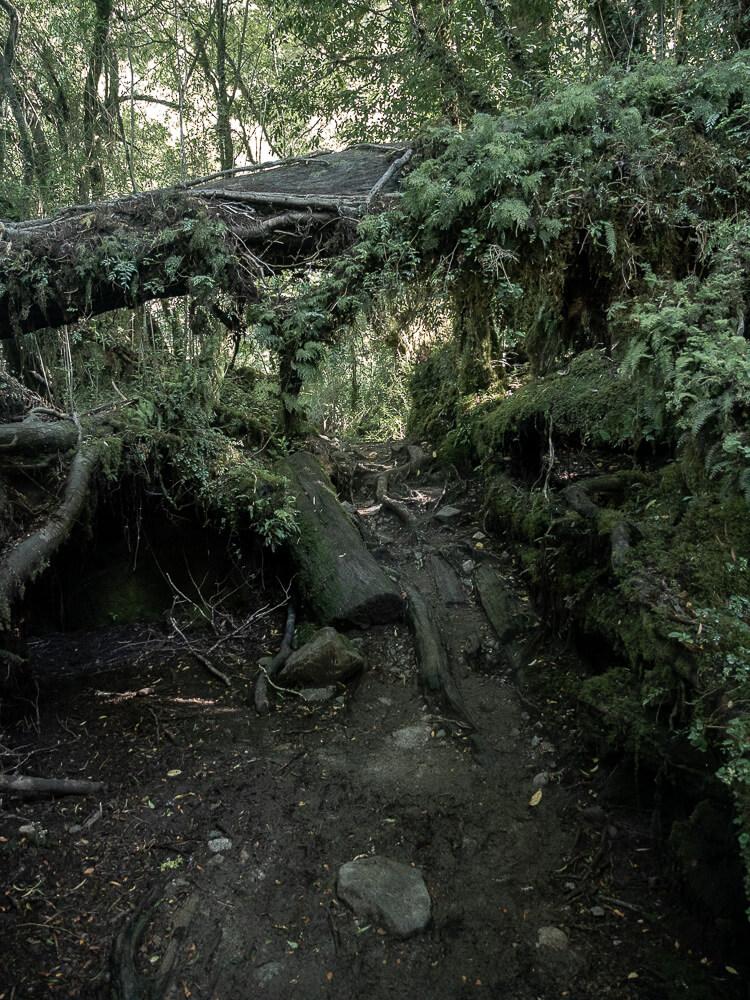 A muddy path leading to Ventisquero Colgante