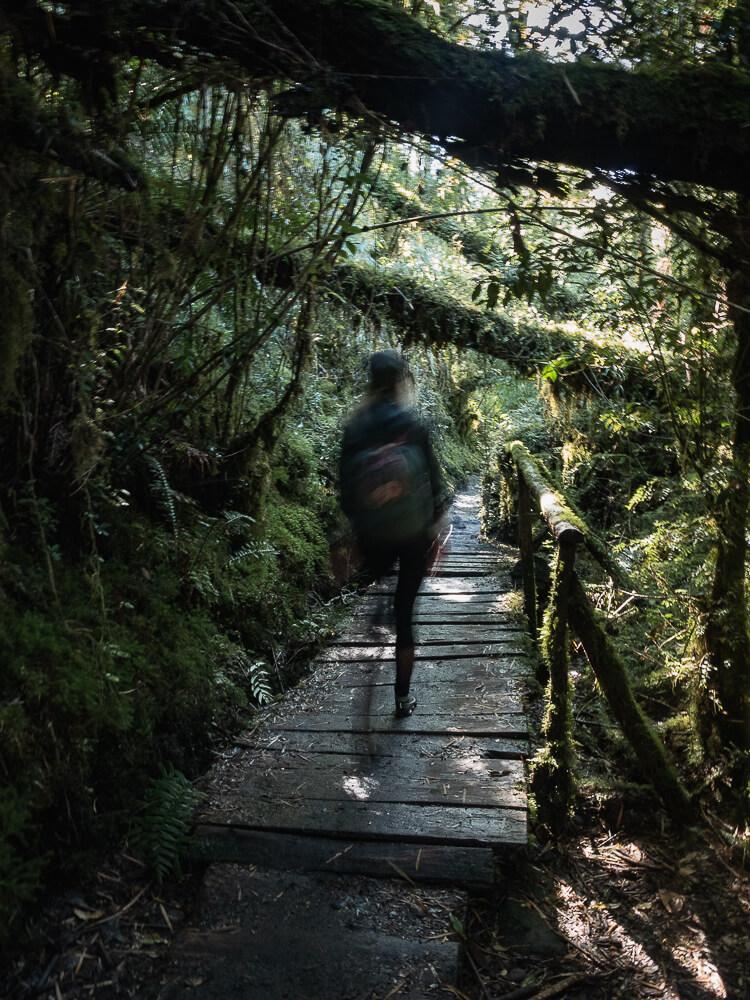 A girl walks on a boardwalk deep in the forest